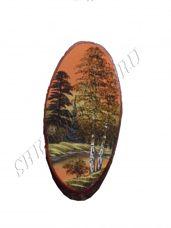 Спил дерева №13